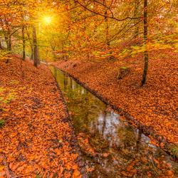 Herfstkleuren bij de Vrijenbergerspreng