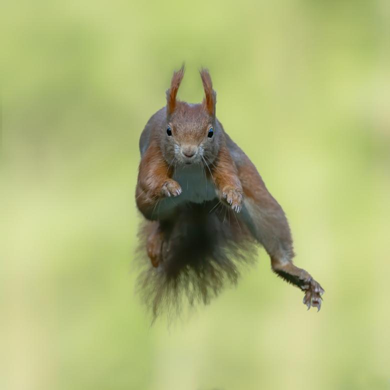 Jumping - Bedankt voor de leuke en bemoedigende reacties en stemmen op mijn vorige foto`s. Dat waardeer ik heel erg!<br /> <br /> Fijne dag allemaal