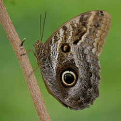 zomaar een vlinder