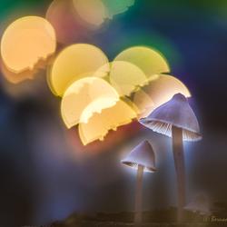 Alladaans wonderlampjes -2