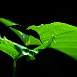 Een groen blaadje