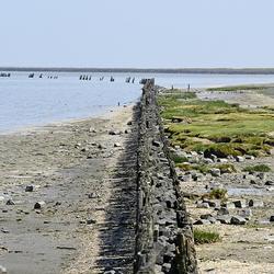 buitendijks 6-6-18 Peazemerlannen lauwersmeer