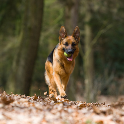 Bailey in het bos