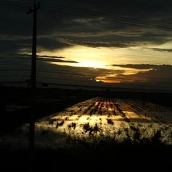 Zonsondergang rijstveld Thailand