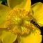 bloem wesp 1