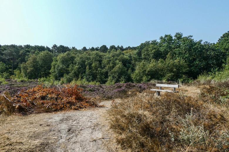 Landschapsfoto Vlieland - Landschapsfoto van Vlieland. 27 Juli 2018, een hele warme dag. Heide en zand en mooie paden en een bankje.
