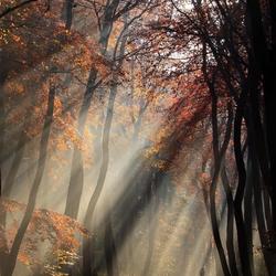 Herfst in Hilversum