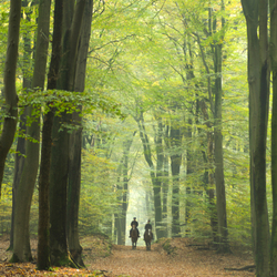 Forest painting origineel