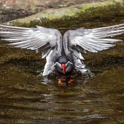Vleugel symmetrie
