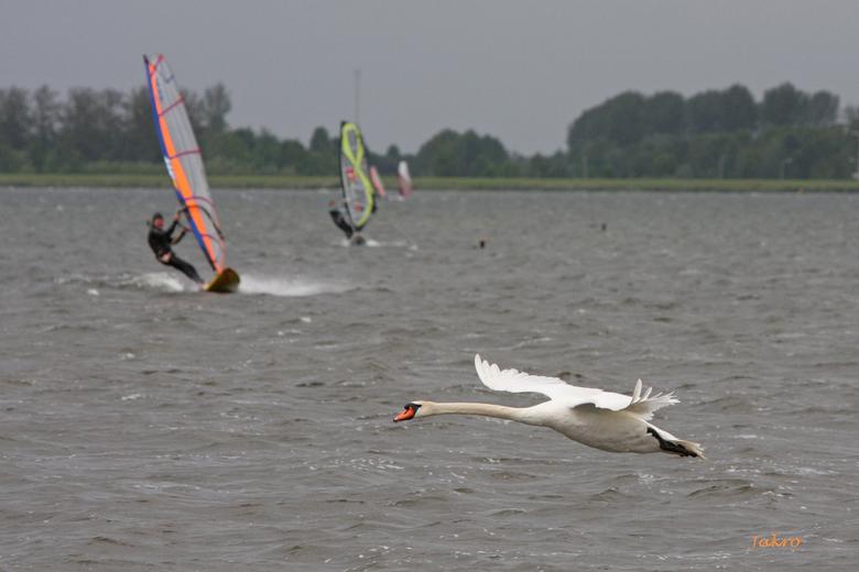 oranje surfen - Windsurfen
