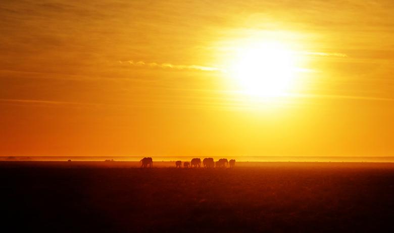 Safari Sunset II