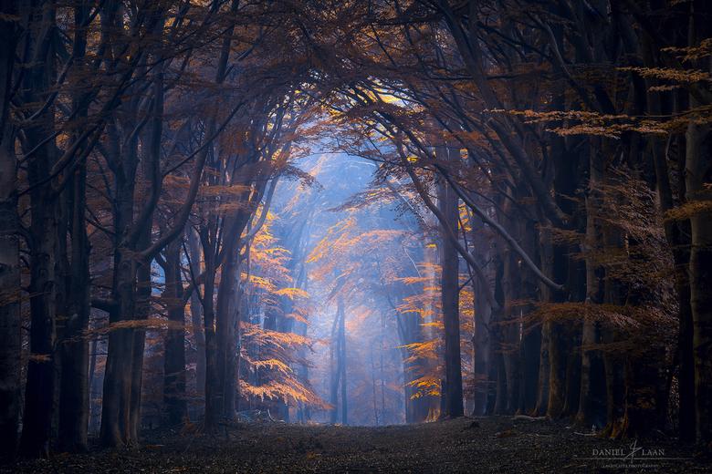 """Ozone - Mist op een bijzondere plek in Nationaal Park de Utrechtse Heuvelrug (2019).<br /> <br /> Workshop aankondiging: <br /> <br /> <a href=""""ht"""