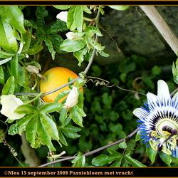 Passiebloem met vrucht