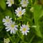 Witte bloemetjes