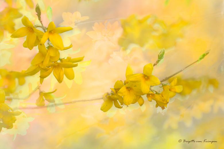 The beauty of Yellow - Hoe geel wil je het hebben<br /> Tot nu toe heb ik nooit meer als een saai registratie plaatje van deze mooie bloem eruit kunn