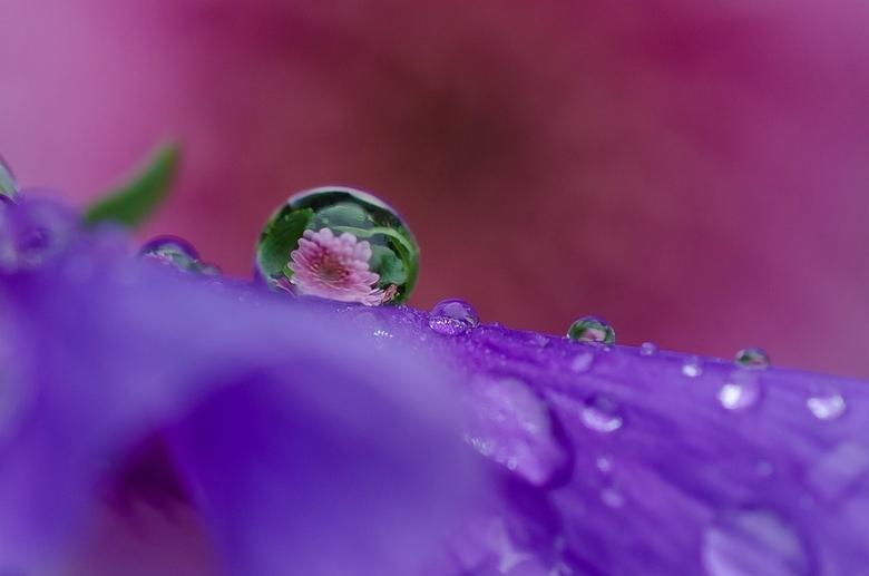 Door het oog van  - Afgelopen dagen regen en mist , dus ook veel druppels , hier een tijdje mee gestoeid , ....Op De viooltjes blijven ze lang zitten