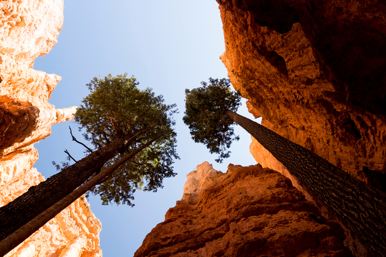 Hoge bomen in Bryce Canyon -