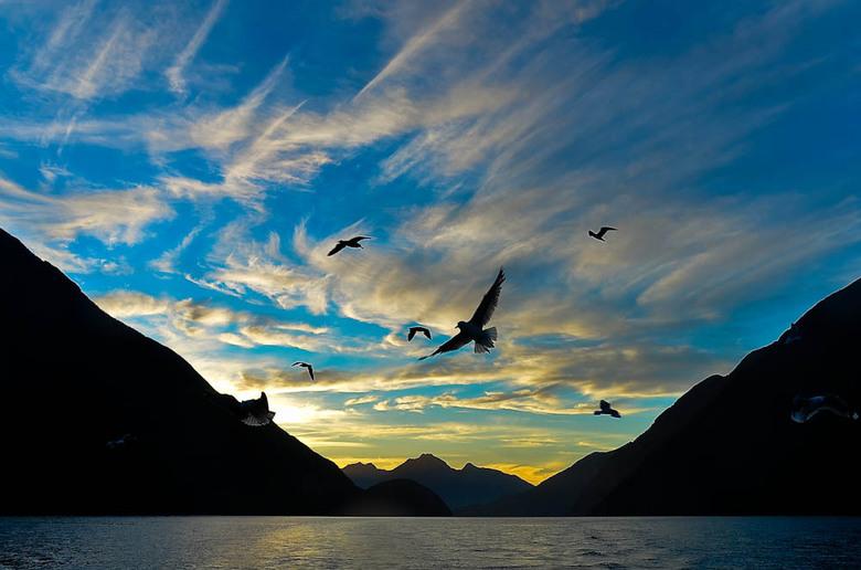 fly for fish - Doubtful Sound - Nieuw Zeeland : vroeg in de avond worden de vers gevangen lobsters klaargemaakt. De afval wordt in zee gedumpd, waar d