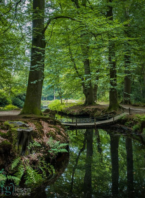 """De Braak in Paterswolde - Landgoed """"De Braak'' in Paterswolde op een zomerse avond."""
