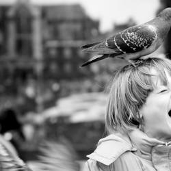 The pigeon & the kid