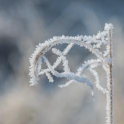 White flag...frozen