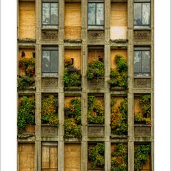 Rotterdam 01 Plantenmuur