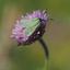 Engels gras en insect
