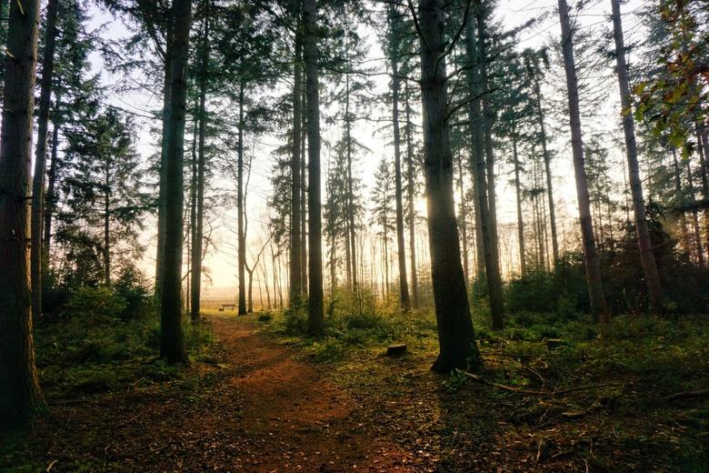GENIETEN - Aan het eind van dit bospad staat een bankje waar je héérlijk in de zon kunt zitten. Uitkijkend over de Renderklippen.