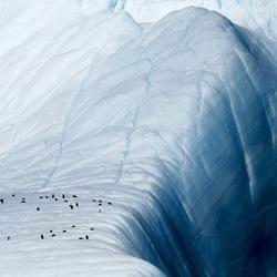 Pinguïns bij afgrond Antarctica