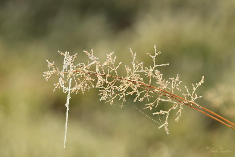 Berijpt gras - Een nachtje winter en mist zorgde voor mooie plaatjes vanmorgen.