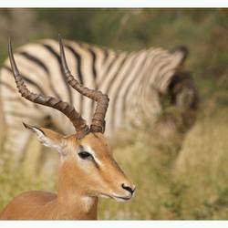 Impalabok