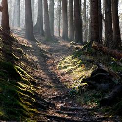 Mysterieuze Ardennen