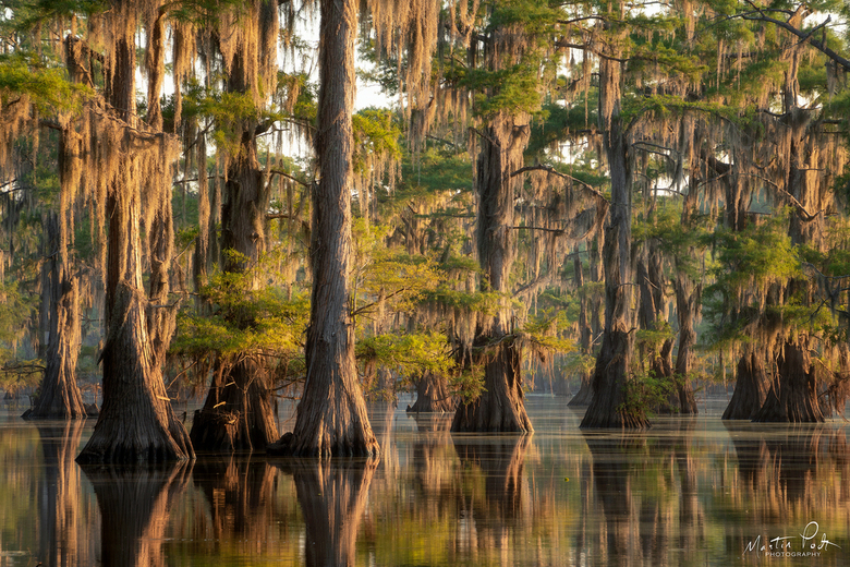 Swamp reflections -