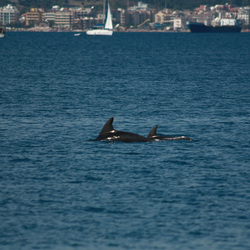 Dolfijnen