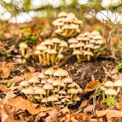 Een flat van paddenstoelen