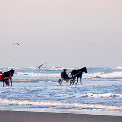 paarden aan zee -1-