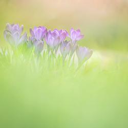 Lenteveld vol bloemen