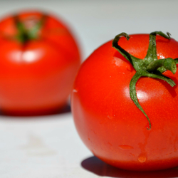 Tomaten voor onderweg.