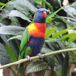 Papegaai @WildLands Adventure Zoo