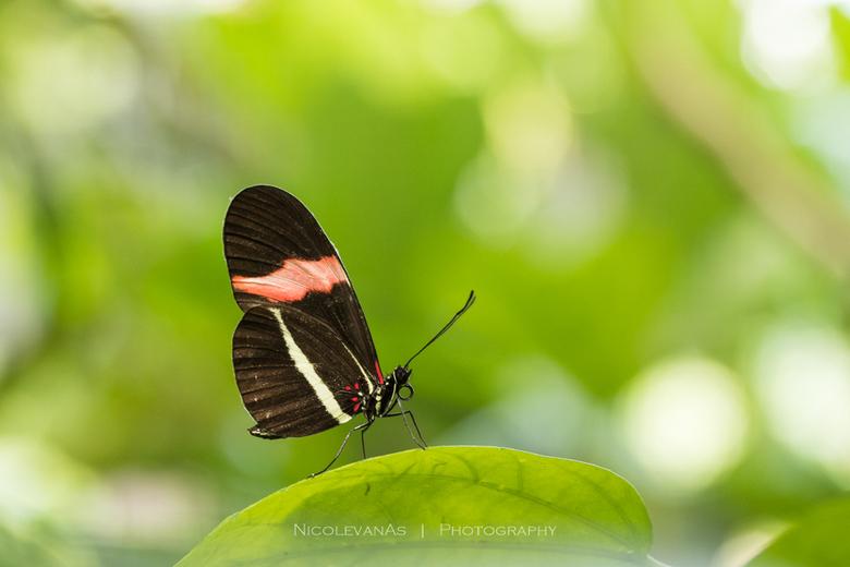 Butterfly in garden - Terwijl de tedere vlinder een rustmoment had, kon ik prachtige foto&#039;s maken.<br /> Foto is gemaakt in de Vlindertuin &quot