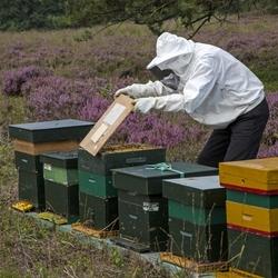 Bijenboer