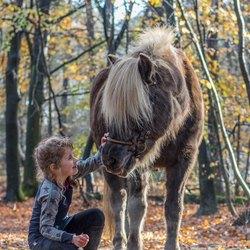 Het paard en het meisje..