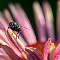 bewaker van de bloem 1