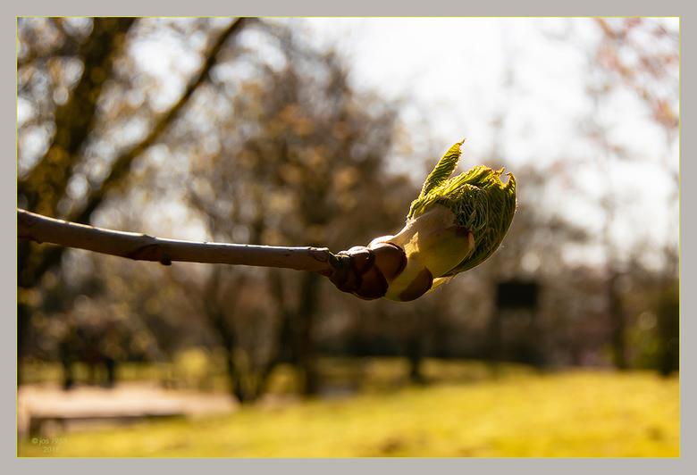 Lente in de Japanse tuin 8