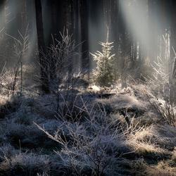 Eerste wintercadeautje