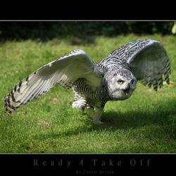 Ready 4 Take Off