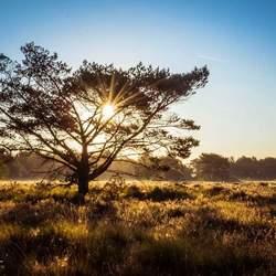 Zonsopkomst Paradijs bos Barneveld