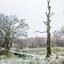 kale winterboom