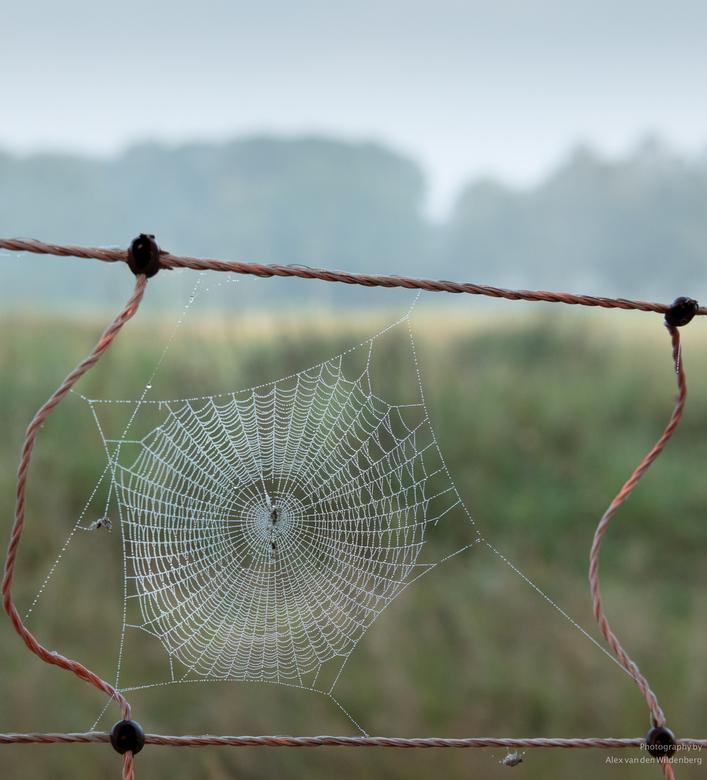 Web met dauwdruppels -