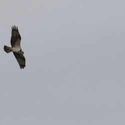 Wie weet wat voor vogel dit is? Genomen bij de OVP